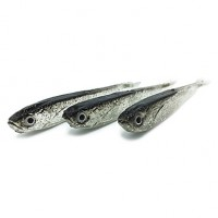 Soft Bait/Fishing Lures Soft Bait/Shad/Soft Jerkbaits 10 Pcs , 2 G/1/18 Oz. Ounce , 80 Mm/3-1/4 & Quot; Inch Gray Siliconsea Fishing /